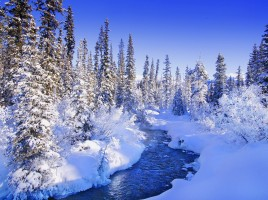 Nature Winter Wallpaper10